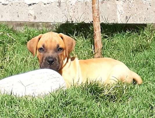 Pet Rehoming Kenya image 1