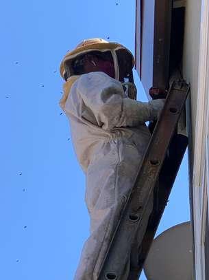 Acebug Fumigation Company image 10