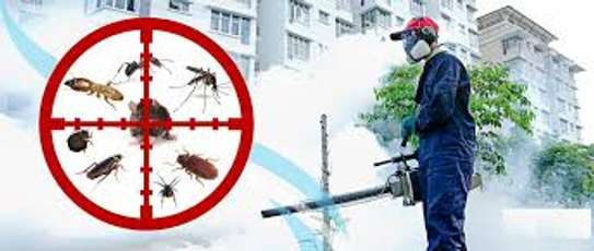 Bed Bug Fumigation & Pest Control Specialists image 5