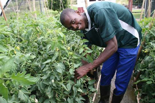 Bestcare Vetted Gardeners,When You Need Someone Reliable To Help You!