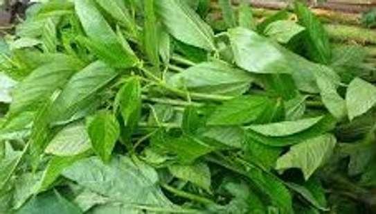 Night Shade (Managu), spider plant (sagaa or saget), amaranth (terere),jute mallow (mrenda) image 4