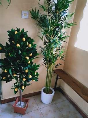 HouseofKar Artificial/Faux plants