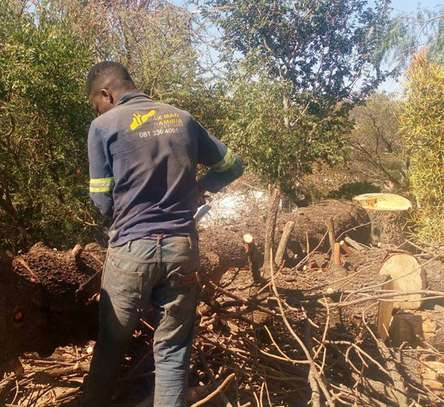 Tree Experts | Tree Removal, Tree Pruning-Free Consultation.Call Now image 5