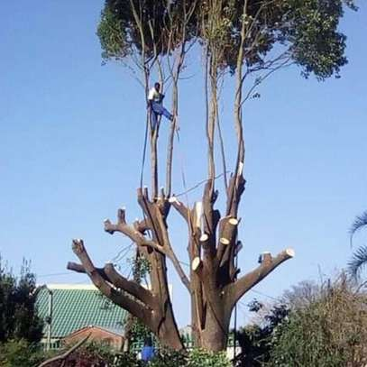 Best Tree Felling, Grass Cutting, Garden Services & rubble removal Grass image 5