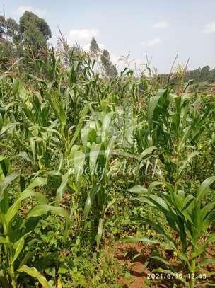 0.05 ha residential land for sale in Gikambura image 7