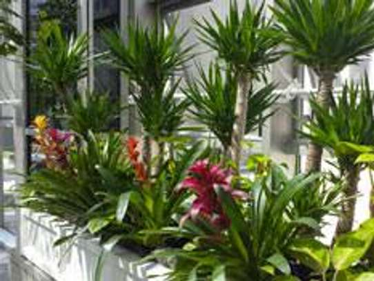 Office Plant Maintenance.Regular watering, light pruning, and fertilizing. image 1