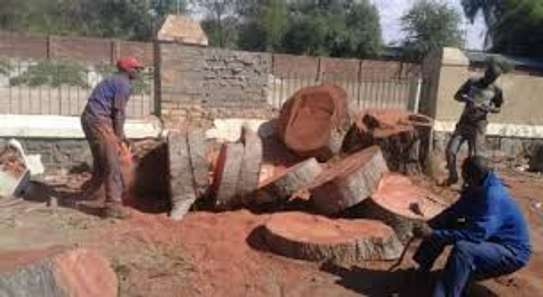 Tree cutting & Site Clearance -Free Quotes image 6