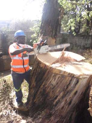 Fast, Professional And Affordable Tree Felling Service. Great Rates. image 3
