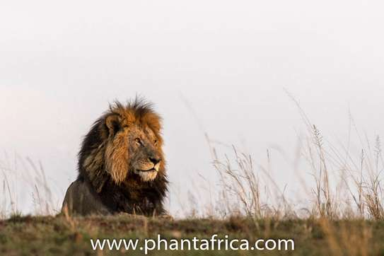 Phant Africa Adventures and Events image 2