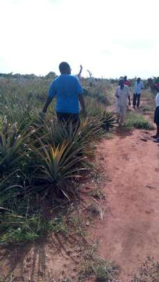 30 Acres of land for sale in Malindi with a clean title deed