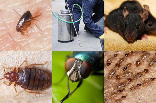 Trusted & Vetted Bed Bug Removal Professionals.Call Now image 10