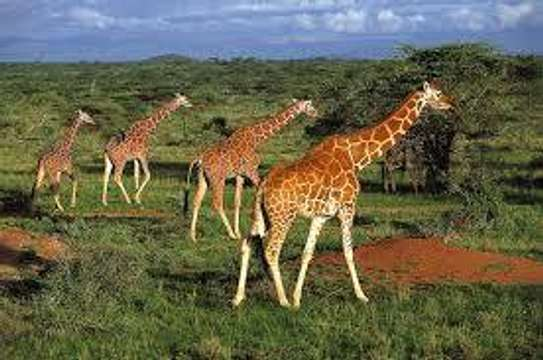 Travel And Volunteer With UCESCO Africa, Kenya