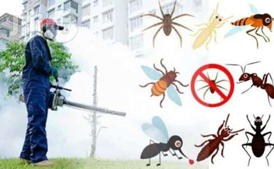 Pest Control and Fumigation Services in