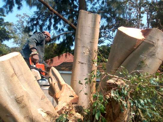 TREE CUTTING & ALL RUBBISH REMOVAL image 4