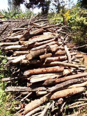 Firewood image 1