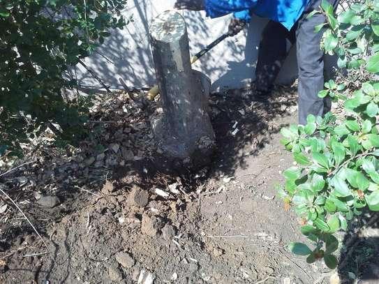 Gardening Services Nairobi /Landscape & Garden Designs image 2