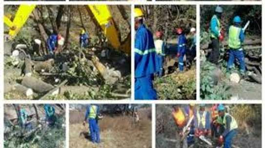 Cheap Tree Cutting Services Nairobi and Surrounding. image 5