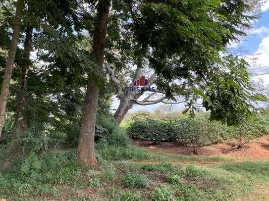 0.25 ac land for sale in Ruiru image 8