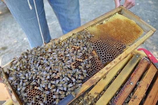Beekeeping Services Meru   Make an impact. Bring bees to your backyard. image 7