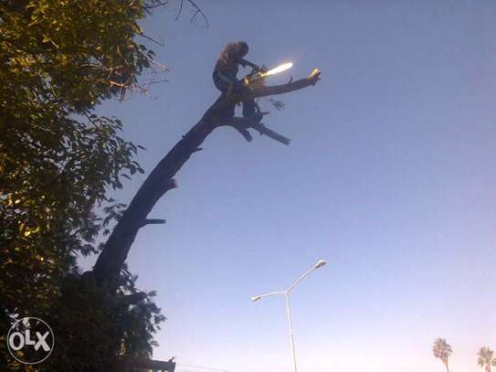Fast, Professional And Affordable Tree Felling Service. Great Rates. image 1