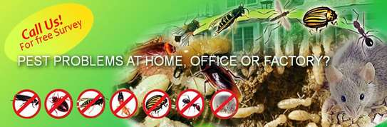 Best Fumigation & Pest Control Services Company Nairobi | Call in our experts today. We Are 24/7 image 4