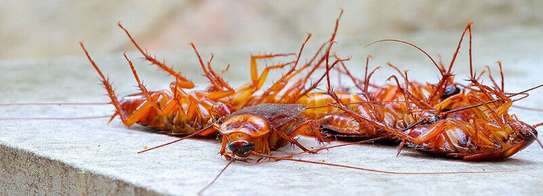 Best Bedbug & Cockroach Fumigation - Get Fumigation Now.Guaranteed image 4
