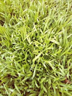 Zimbabwe Grass (50kg Sack) image 1