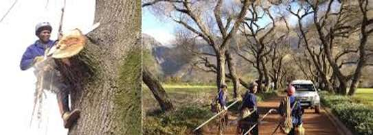 Tree Experts - Tree Felling and Tree Care.Service Guaranteed image 3