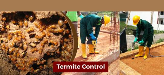 Best Fumigation & Pest Control Services Company Nairobi | Call in our experts today. We Are 24/7 image 5