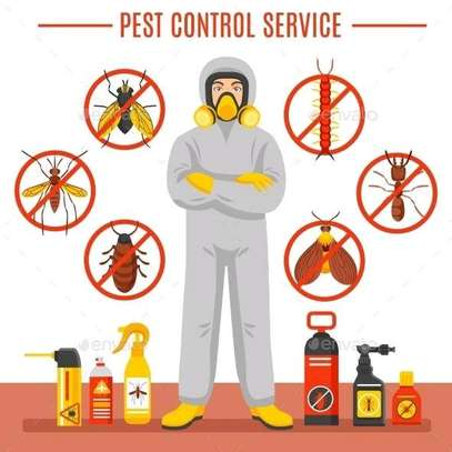 Pest control services image 1