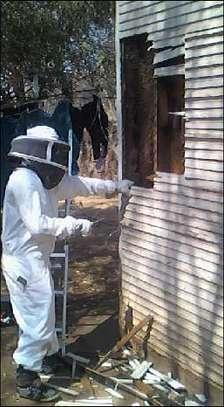 Beekeeping Services Meru   Make an impact. Bring bees to your backyard. image 4
