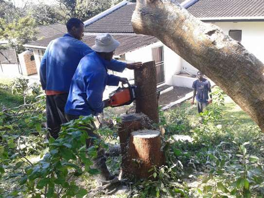 Gardening Services Nairobi /Landscape & Garden Designs image 8