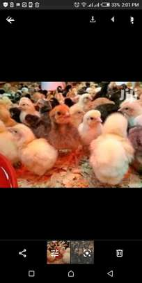 Improved Kienyeji chicks kenbro,kuroiler- rainbow rooster image 1