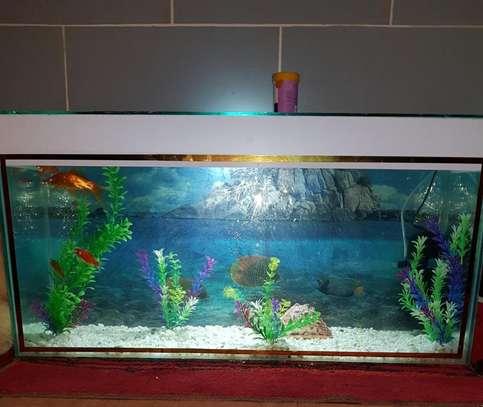 Desktop Aquarium image 1