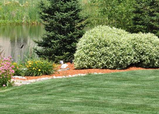 Best Gardening & Lawn Mowing Services|Contact Us Today. image 14