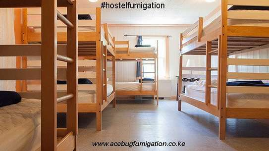Acebug Fumigation Company image 11