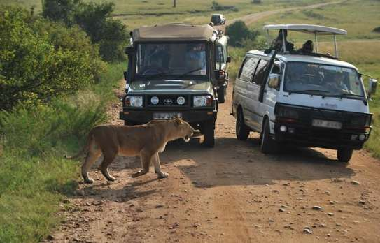 Daily Departures For 3 Days Maasai Mara Safari image 2
