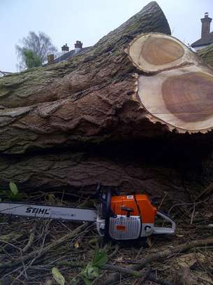Tree Felling & Removal Professionals.Lowest Price Guarantee.