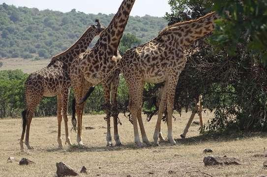 Nairobi National Park Day Trip image 2