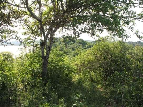 Kilifi - Land image 6