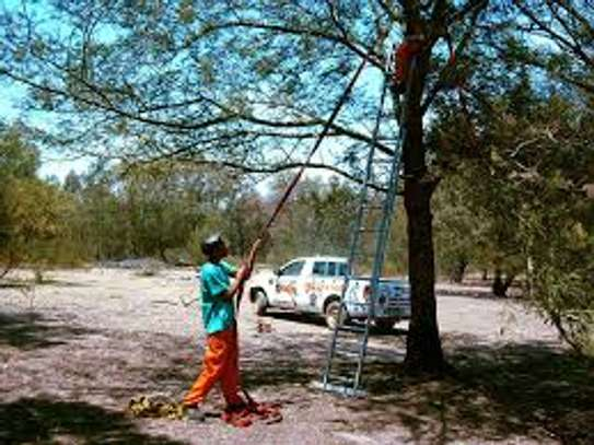 Tree Cutting & Removal.Fast, Professional And Affordable.Landscaping & Gardening Services image 4