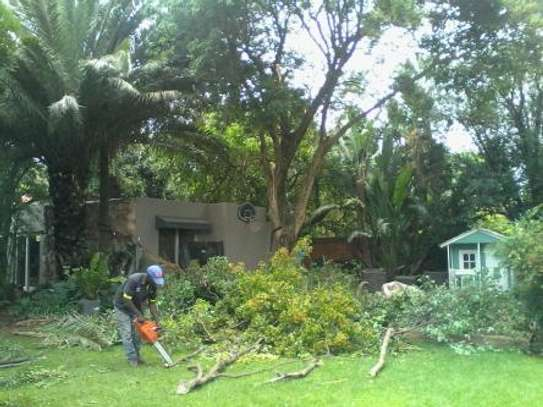 Tree Trimming Services in Nairobi.100% Satisfaction Guarantee. Call now! image 1