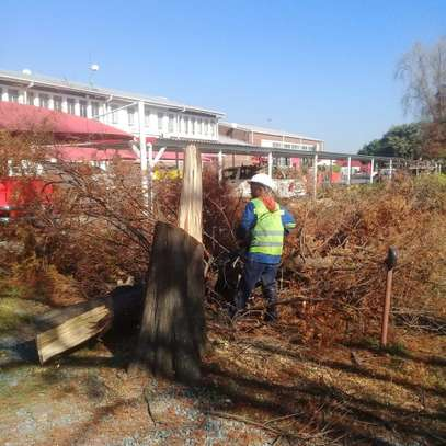 Tree Cutting services - Competitive Tree Felling Removal.Call And Get Free Quote Now. image 2