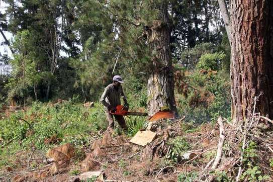 Tree Experts | Tree Removal, Tree Pruning-Free Consultation.Call Now image 14