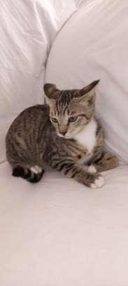 Kittens image 3