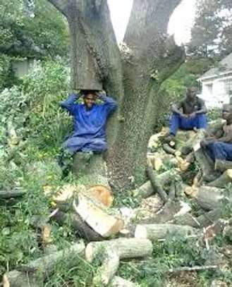 Tree cutting & Site Clearance -Free Quotes image 15