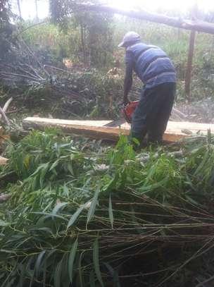 Tree felling/ frame making image 1