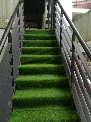 Turf Grass image 6