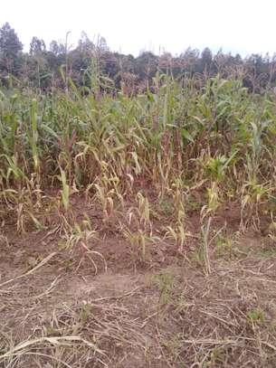0.05 ha residential land for sale in Kikuyu Town image 6