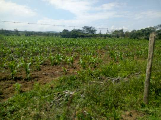 1acre land for sale in Naivasha image 11